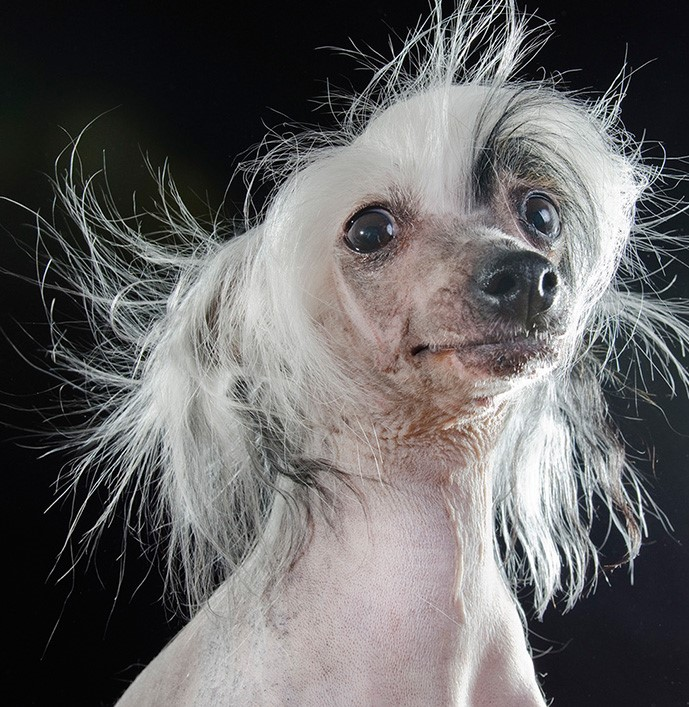 09_series-of-hairless-dogs-by-sophie-gamand