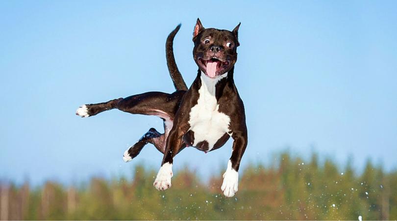 Летающая собачка