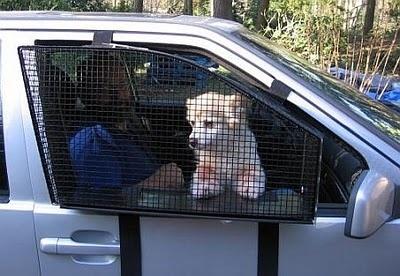 Защитная сеткв автомобиль для собаки