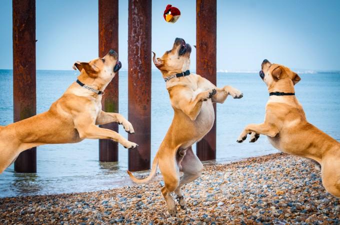 Rhian-White-flying-dogs-pixanews-18-680x451