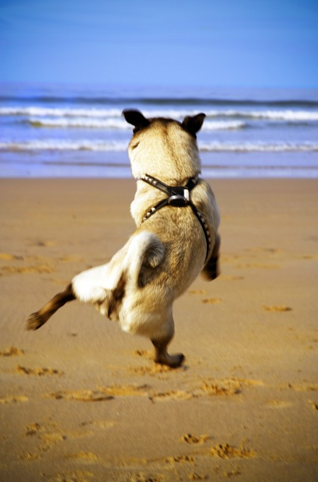Rhian-White-flying-dogs-pixanews-2-449x680