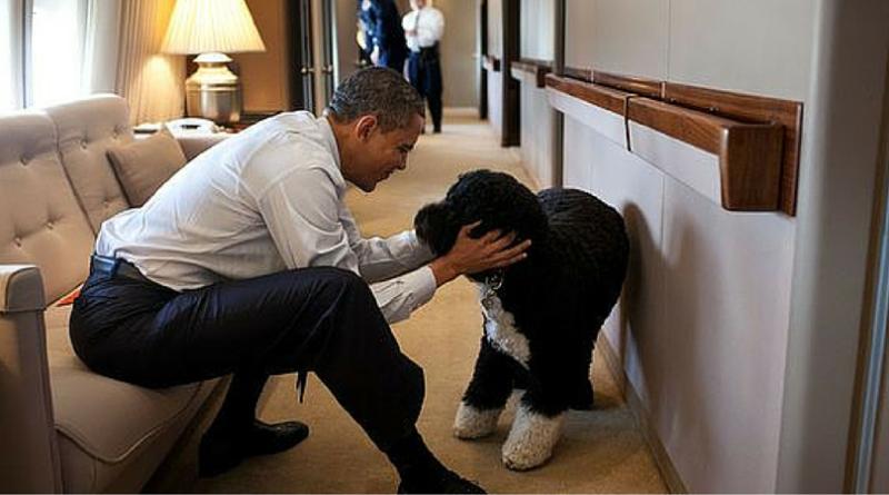 Собака Барака Обамы