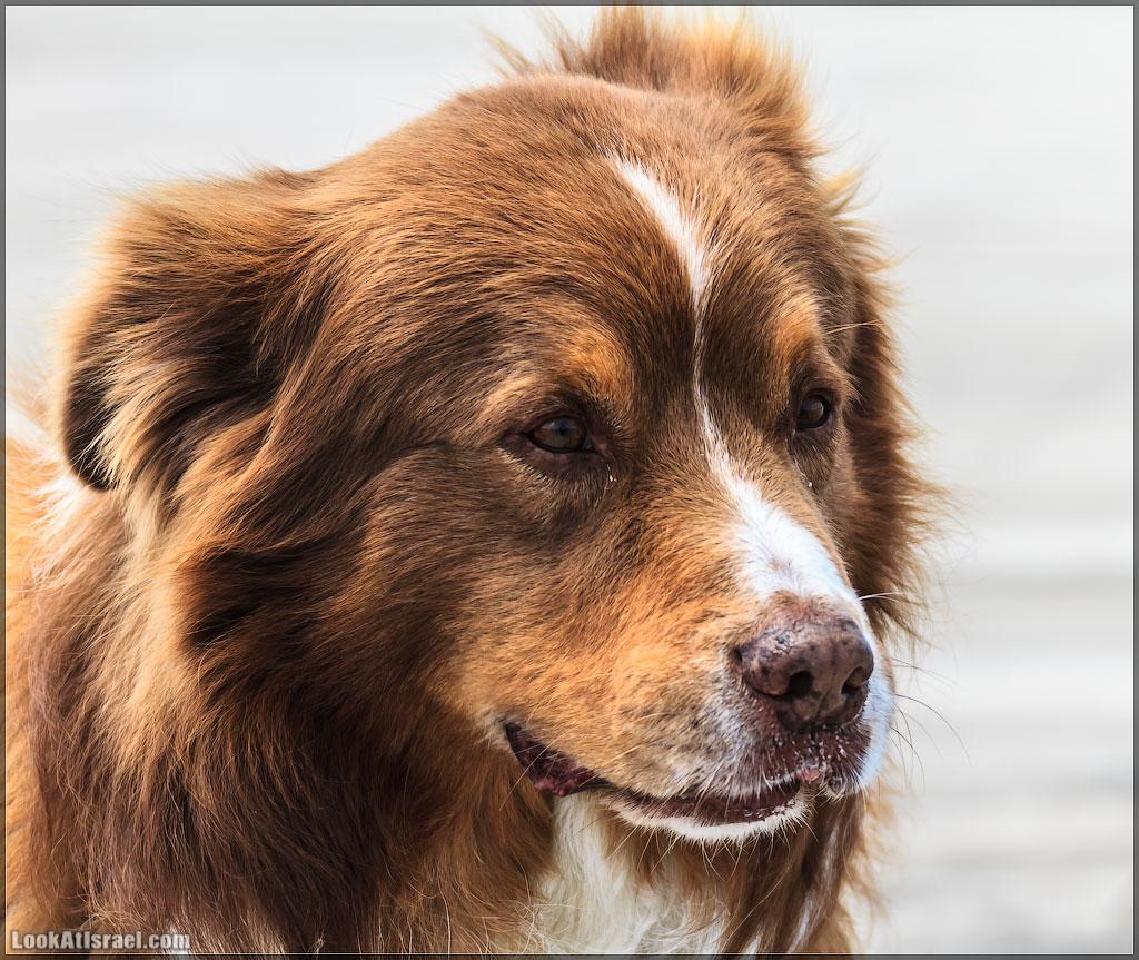 20120426_ta_dogs_003_4844