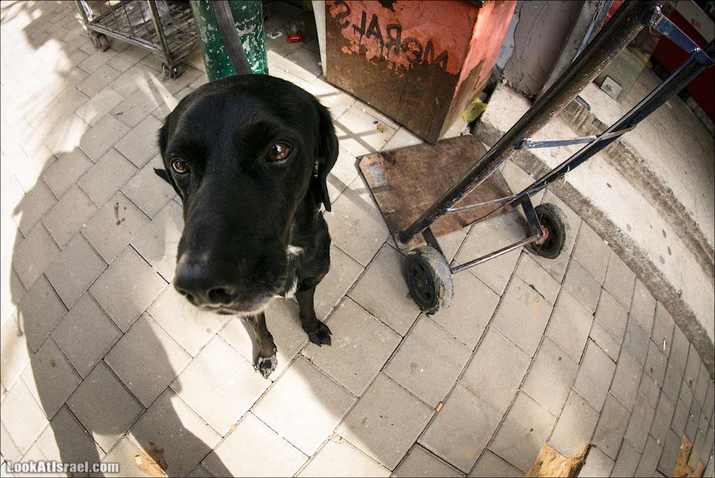 20130208_ta_dog_nose_001_5d3_8151