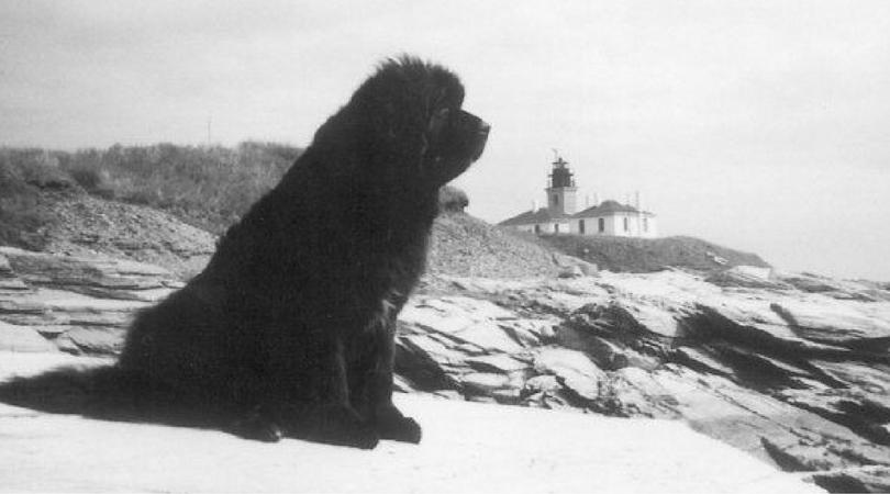 Собаки Титаника