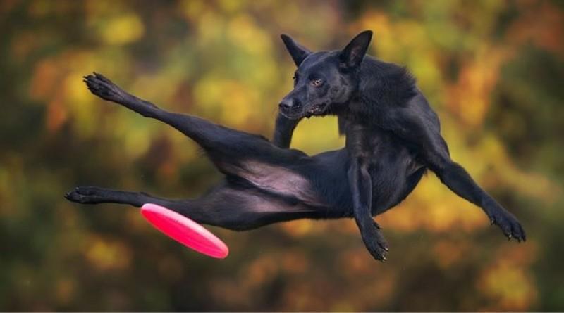 Собаки Клаудио Пикколи