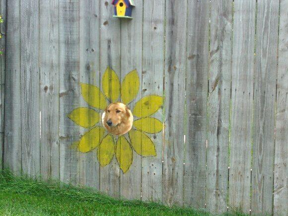 Окно для собак