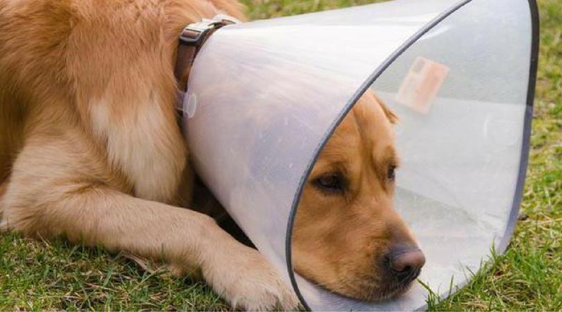 Собаку ударило током