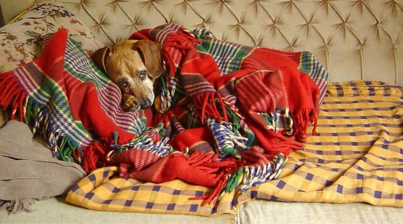 Пониженная температура у собаки