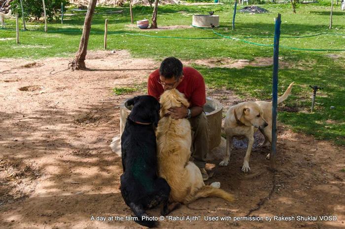 Мужчина ухаживает за 735 собаками