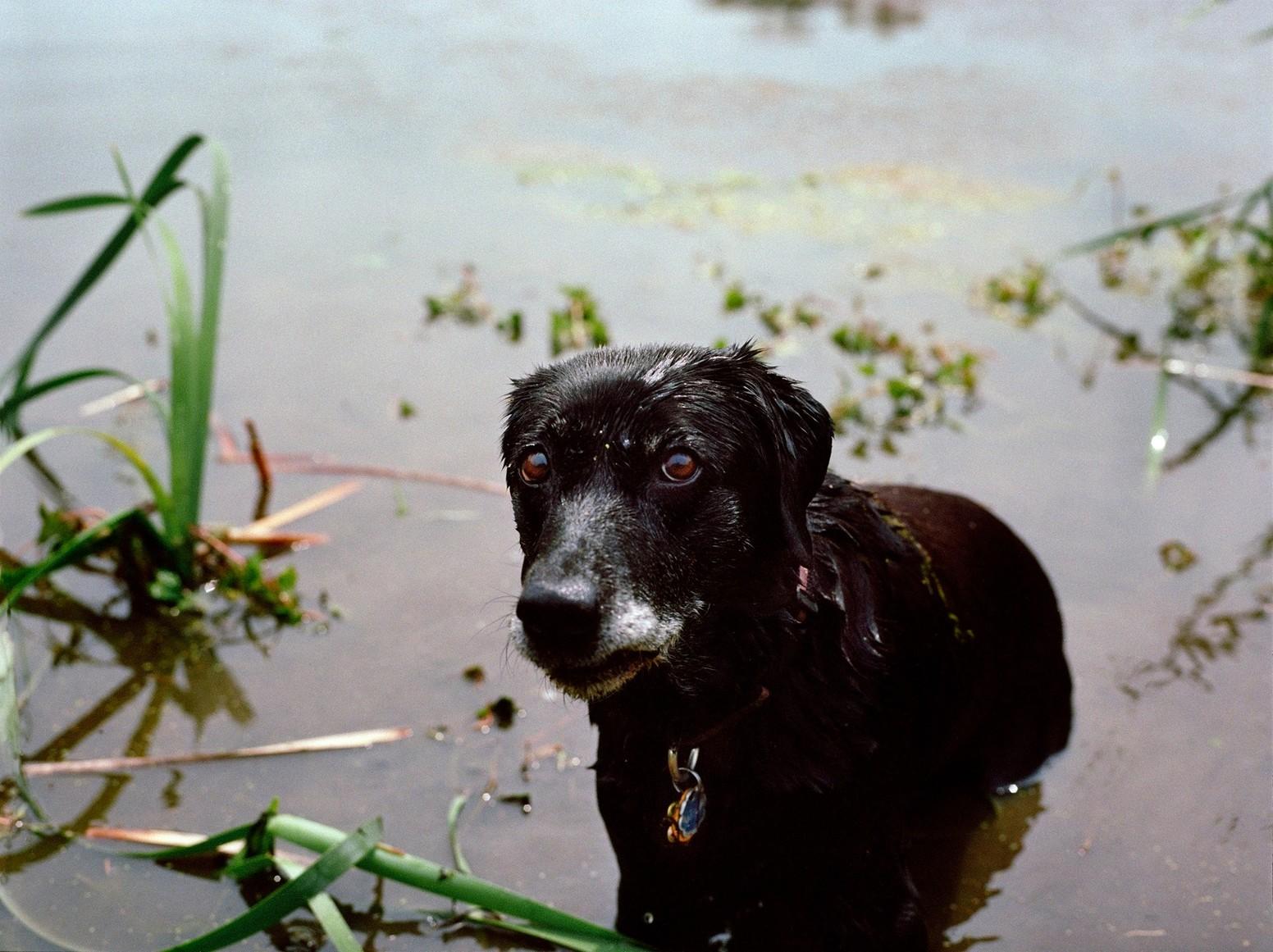 Собака спасатель 11 сентября 2001 года Нью_Йорк