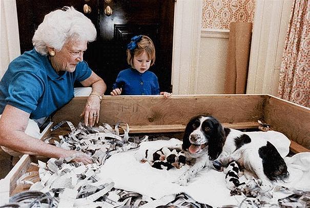 Собака Джоржа Буша с щенками