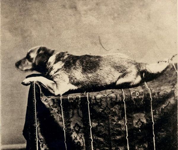 Собака Линкольна Фидо