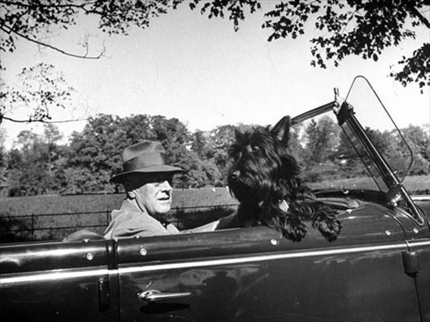 Франклин Рузвельт с собакой в автомобиле