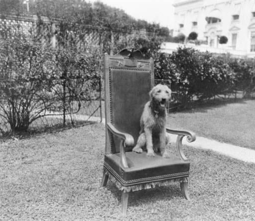Собака Уоррена Гардинга