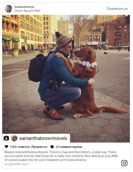 Собака звезда Инстаграм