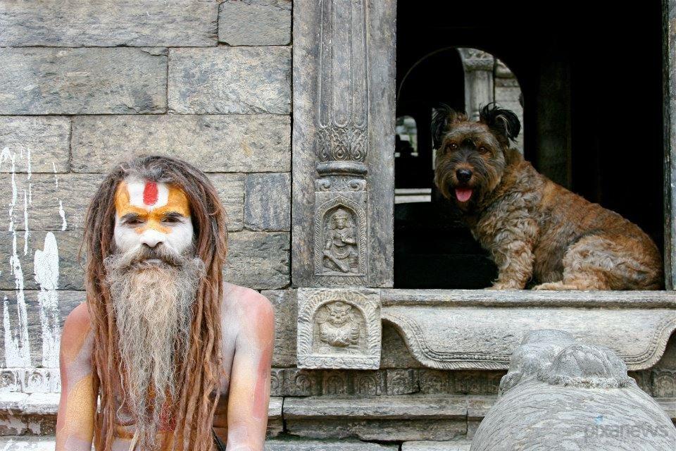 Собака путешествует по миру