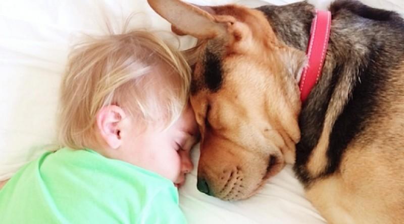 Дружба собаки и мальчика