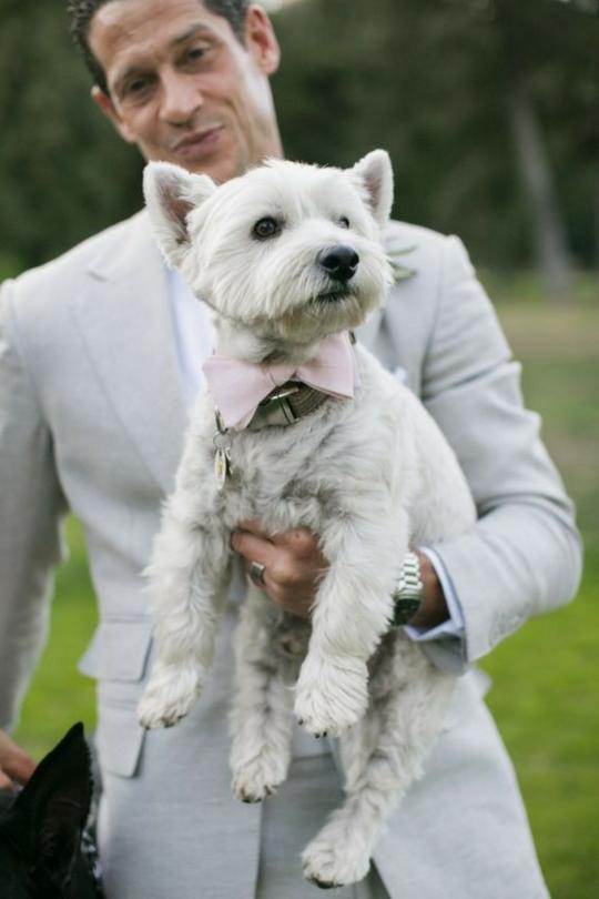 Собака на свадьбе