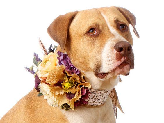 Красивые ошейники для собак