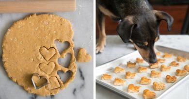Печенье для собак с яблочным пюре
