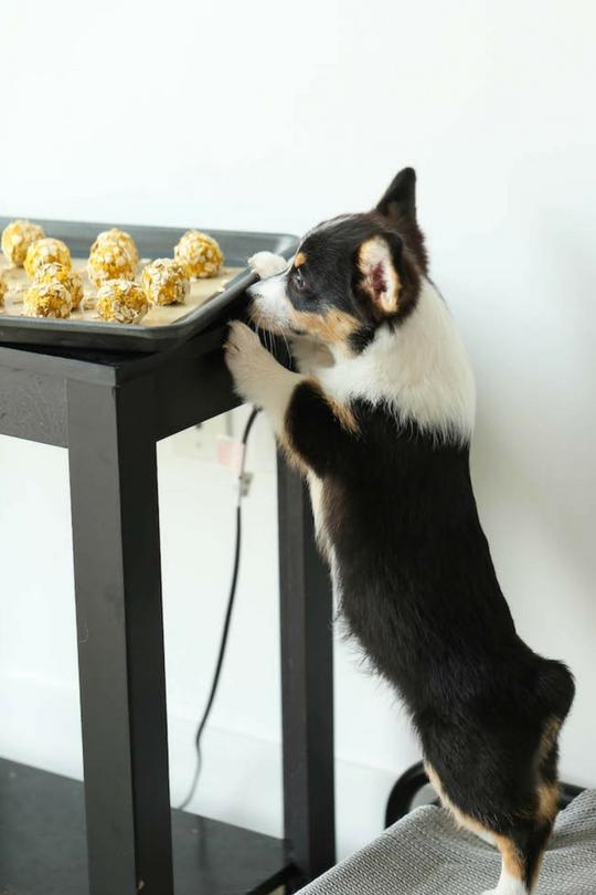 Лакомство для собак