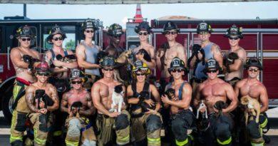 Пожарные спасают собак