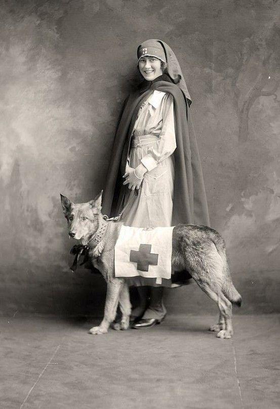 Собака на войне