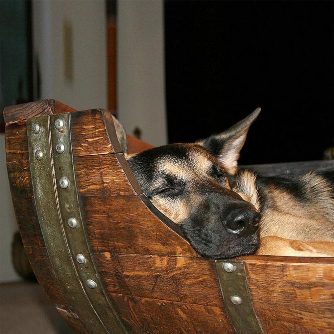 Лежаки для собаки из бочки