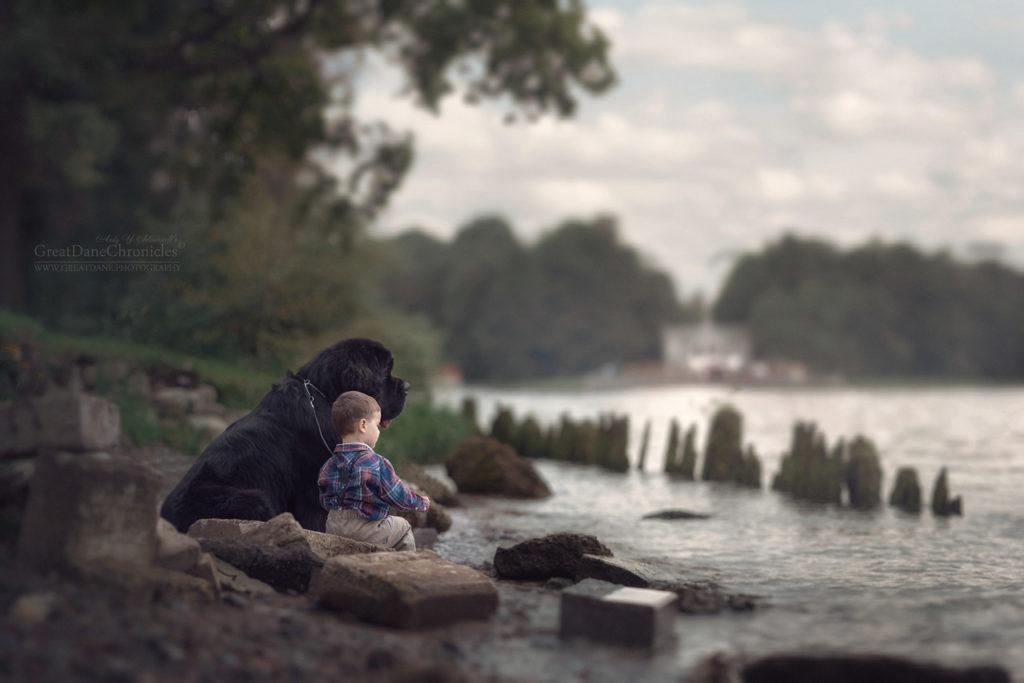 Маленькие дети и большие собаки