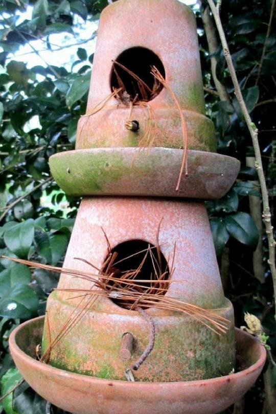 Гнездо для карелов своими руками фото 177