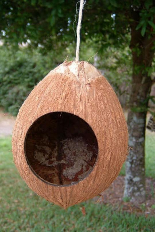 Гнездо для карелов своими руками фото 675
