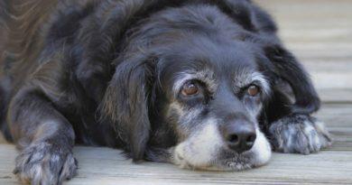 Болезни кожи у пожилых собак