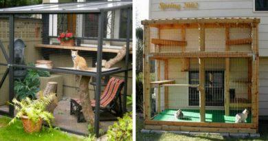 Вольеры для кошек на даче