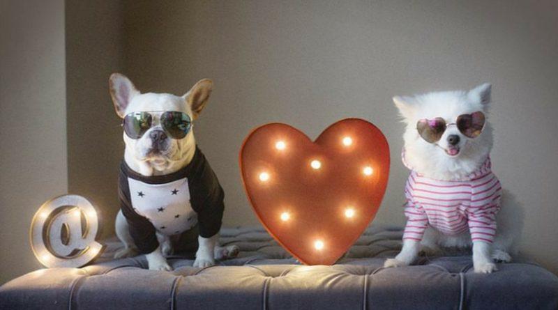 Собаки решили пожениться