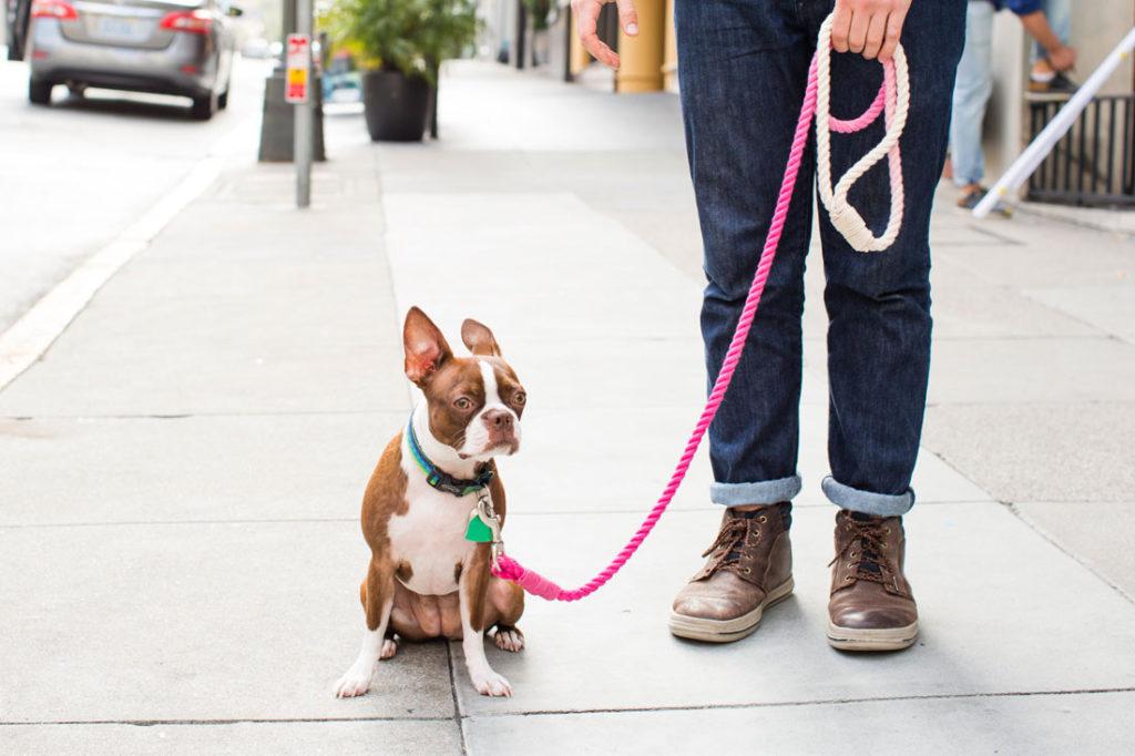 Поводок для собаки из веревки