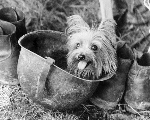 Старые фотографии собак