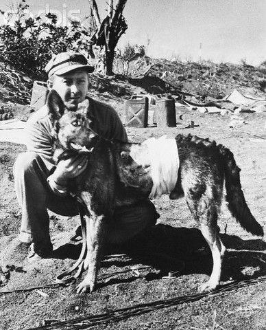 Спасение собак в армии