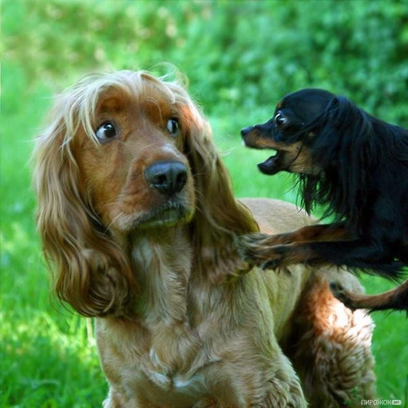 Собака боится