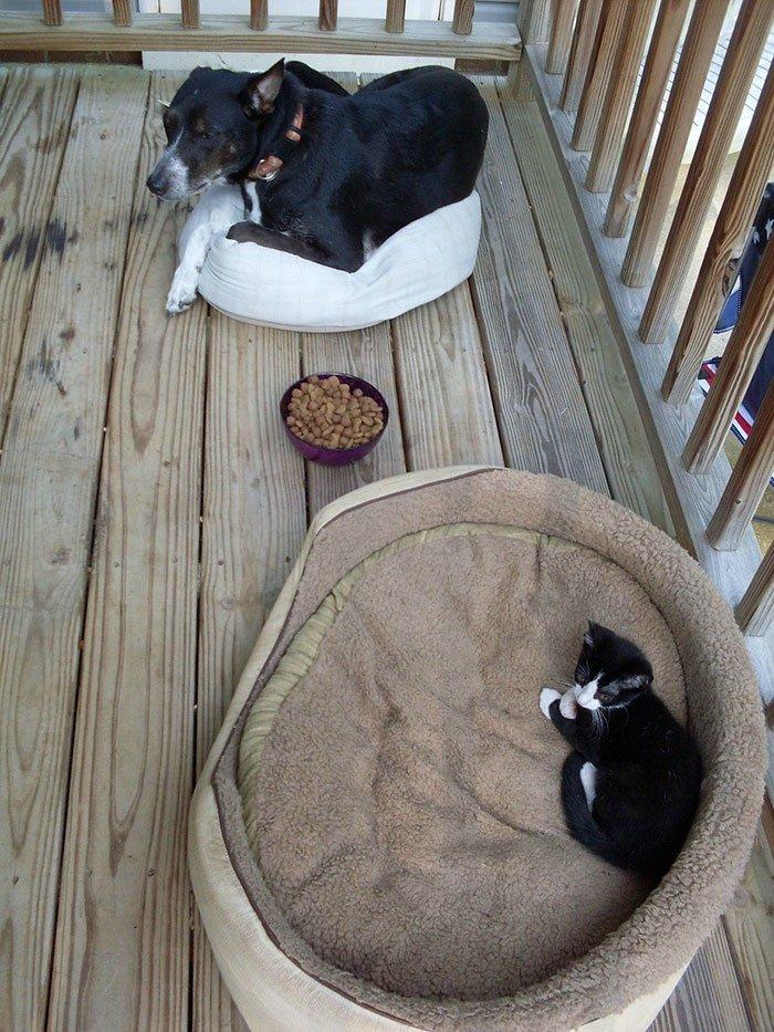 Кошка в лежаке собаки