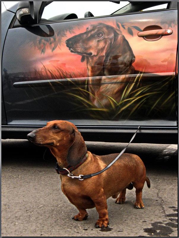 Аэрография собака такса