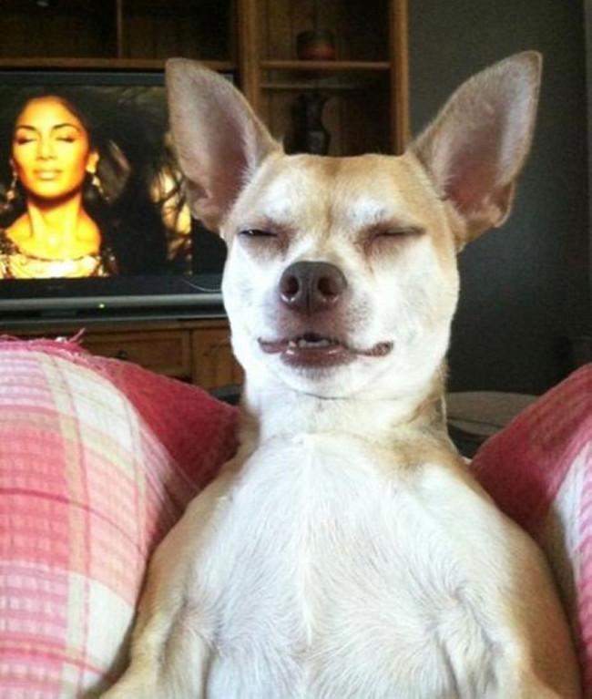 Сайт про собак
