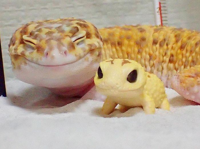Геккон улыбается