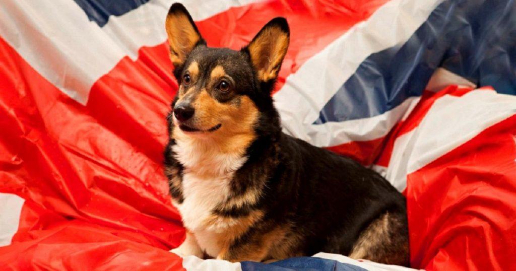 Собака и флаг Великобритании