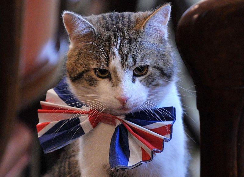 Кот и флаг Великобритании