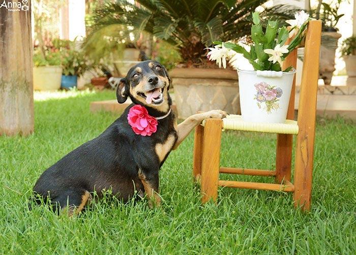 Беременная собака Лилика