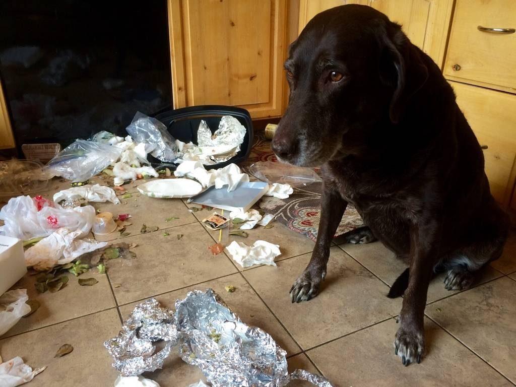 Собака и мусорное ведро