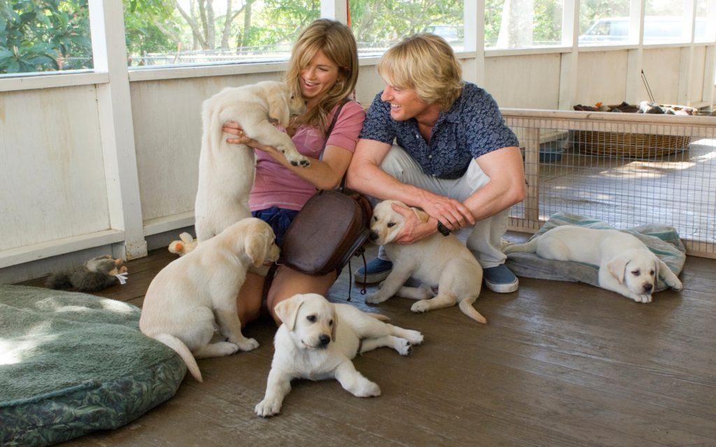 Собаки и семья