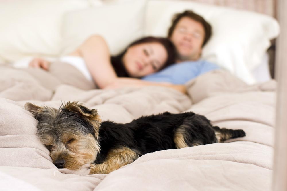 Собака спит в кровати