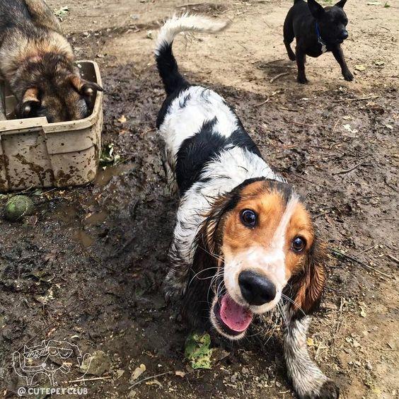 Собаки в грязи